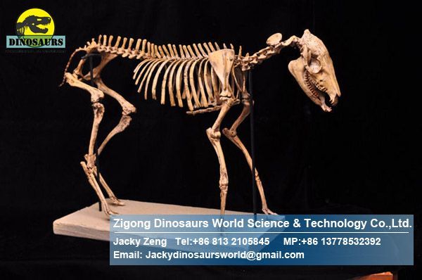 Prehistorical park showroom science exhibition skeleton Hippus DWS013
