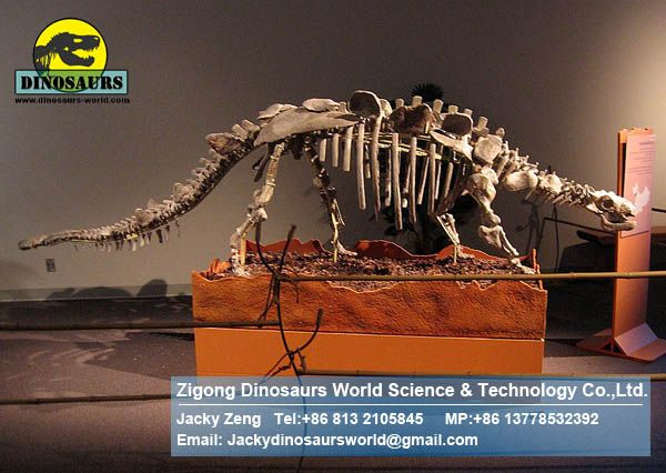 Showroom Science dinopark dinosaurs skeleton replica DWS011