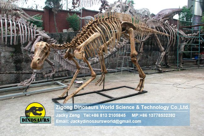 Museum exhibition equipment hadrosaur  skeleton DWS019-1