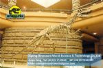 Amusement park skeleton repalica Lufengosaurus Skeleton DWS009