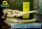 Dinosaurs fossils replica  ( Phytosaurus fossil) DWF001
