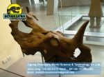 Animatronic dinosaurs skeleton replica Triceratops Head DWF005