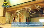 Exhibition hall museum skeleton Lufengosaurus( Lufengosaurus )DWS007