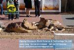 Playground Amusement park Fiberglass Dinosaurs ( Baby triceratops ) DWD040
