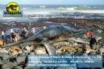 Theme park animatronic life-sized dinosaur (Plesiosaur) DWD092