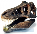 Artificial fossils replica Tyrannosaurus rex skull DWF014