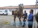 Walking with realistic animatronic dinosaur coat DWE3324-14