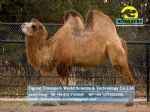 Playing items for kids in parks animatronic animals Camel DWA061